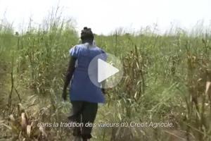 double-elephant-reforestation-senegal-extrait-big